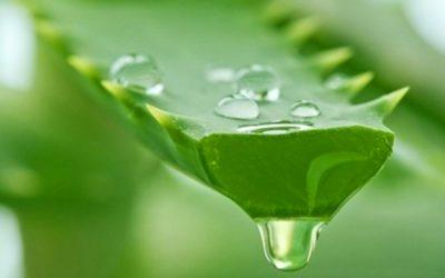 Aloe Vera juice benefits and effective tips