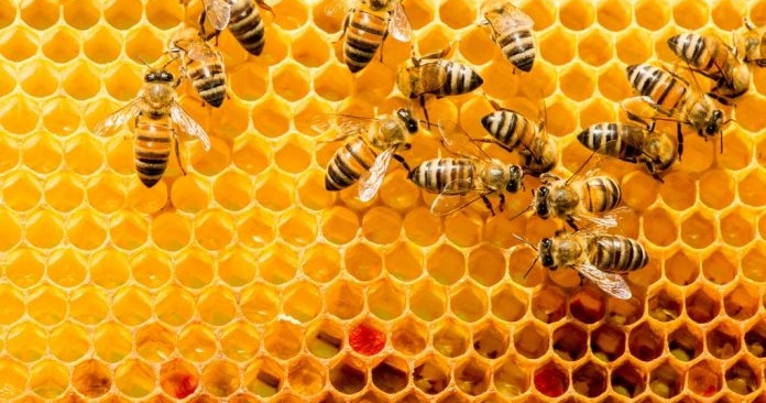 Royal jelly: bees product for everyone's health